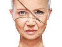 アンチエイジングの切り札。免疫系の加齢を逆転させる薬が開発(米研究)