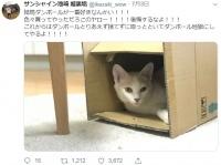 ※画像はサンシャイン池崎のツイッター裏アカウント『@ikezaki_wow』より