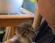 「子猫にアズーラと名付けようと思う」ヒゲメン、小さな猫と出会いその記念の瞬間を撮影