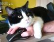 お願いだから邪魔しないで!猫と暮らす飼い主の悲喜こもごもを集めてみた