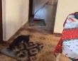 車椅子のおばあさんが危なくないように自発的に敷物を移動させる犬