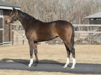 ジェラルディーナの母は牝馬三冠を達成したジェンティルドンナ