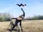 ゾウに回転しながら乗る男