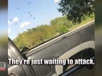 米ノースカロライナ州で、大型ハリケーン通過後に巨大な蚊が大量発生!