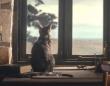 ひとり遊びにも飽きちゃった猫「お留守番はさびしいニャン!」と飼い主の帰宅を心待ちにする