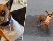 コロナで外出制限中の男性、あのお菓子が食べたくて、愛犬に「おつかい」させる。作戦成功!(メキシコ)