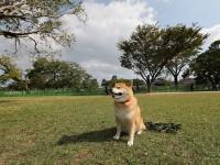 阿蘇観光にファンとの集い! 柴犬まるが紹介する九州ぶらり旅(中編)