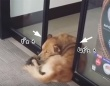 コンビニの自動ドアに抱きしめられたい犬のいる風景(タイ)