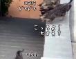 子猫を全力で愛する3匹の猫。階段が心配でいてもたってもいられず
