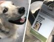 癒しが必要なのは患者だけじゃない。激務が続く病院スタッフを元気づけるために雇われたセラピー犬(アメリカ)