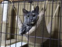 「まいきゃっと湯河原店」の猫