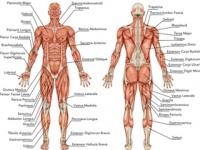解剖学の基礎知識がおろそかにされている(http://jp.depositphotos.com)