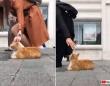 トルコはやっぱ猫の国。イスタンブールの歩道に鎮座する人々と通行人たちの様子を早回しで
