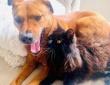 雷を怖がる犬をなぐさめる猫の友情物語(アメリカ)
