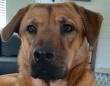 「8か月前に拾った犬だけど、今はすっかりくつろいでるよ。」元捨て犬のくつろいだ様子に関する海外の反応