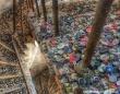 朽ちかけの美学。世界14の印象的な廃墟写真