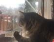 猫?余裕っす。ガラス越しの鳥、猫の肉球攻撃を完全スルー