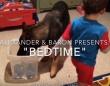 世界最強のベビーシッター犬が子どもの寝る前にすること。