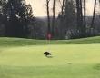 鳥とゴルフってやっぱ関係深いわ。本物のイーグル(ワシ)がホールインワンをもたらしてくれた件(カナダ)