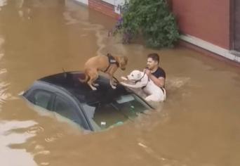 ベルギーで大規模洪水発生。住民らが力を合わせて2匹の犬を救出