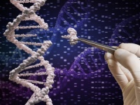 世界初の遺伝子編集された人間の赤ちゃんが誕生したと主張する科学者。HIVに対する免疫を持つ(中国)