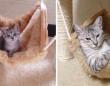 大人の階段上る、子猫の成長ビフォア・アフター