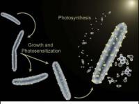 ※画像は、「Berkeley Lab」より引用