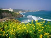韓国の済州島(「Wikipedia」より)