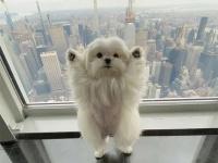 「みんな元気をだして!」2足立ちで万歳ポーズ!愛と喜びをみんなに広めることを使命とするセラピー犬(アメリカ)
