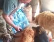 「さあ、ご飯を持ってきたよ!」ロックダウン中の世界各地で、動物たちにエサを届ける人々がいた