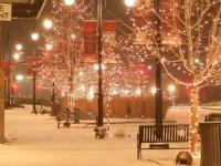クリスマスデートにもおすすめ! 大学生がこの冬行く予定のイルミネーションスポット5選