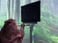 脳にチップを埋め込み思考だけでゲームをする猿の映像が公開される(ニューラリンク)