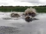 蠢く巨大生物… あなたはこの川で泳ぐ覚悟がありますか?