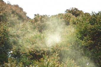 悲報。花粉症は年々酷くなっている。その意外な原因とは?(アメリカ)