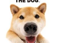 THE DOGとコラボが決定!!|柴犬まる、幼なじみとイヌリンピックに出場!