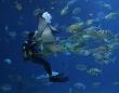 魚がうつ状態に。水族館や観光地の海に住む魚たちは自粛で人間と会えず寂しがっている(オーストラリア)