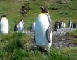 ペンギンのフンから発生する笑気ガスを吸って研究者がイカれてしまうという事案が発生(サウスジョージア島)