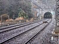 線路内に入り込んだシカ(写真提供=近畿日本鉄道)