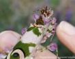 可憐な花にしか見えない!美しすぎて発見者を驚かせたハナカマキリ(南アフリカ)※カマキリ出演中