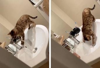 悪知恵が働きすぎるキャット。洗面台の排水口を容器で塞いで水を流し家を水浸しに(イギリス)