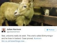ユニコーンのような角を持つ羊がアイスランドで発見される!