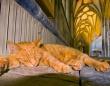 英国ウェルズ大聖堂に勤務する猫、ルイス氏にスキャンダル勃発。3件の犬襲撃事件の容疑がかかる(追記あり)