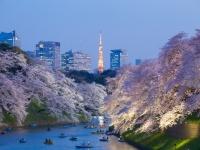 今年ももうすぐ開花! 愛車で行きたい桜スポットまとめ!