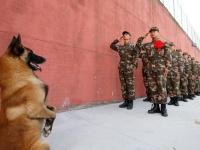 中国の警察犬、離任兵士に「敬礼」(写真:Imaginechina/アフロ)