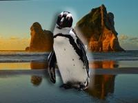 全てのペンギンの祖先は8番目の失われた大陸ジーランディアにいた
