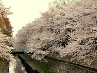 杉並区・和田堀公園(「Wikipedia」より)