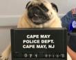 犬氏、ついに逮捕。逮捕時のマグショットが公開される(アメリカ)
