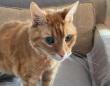 「うちの22歳の猫を見てください!」シニア猫の写真が海外掲示板で話題に