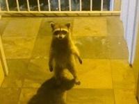 玄関前に小さなアイツがいた。家に帰ったら仁王立ちで待ち構えていたものとは?