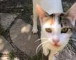 怪我した脚を引きずりながら人間に助けを求めに来た猫、茂みに隠した5匹の子猫の元へと案内する